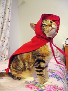 kitten dressed as red riding hood