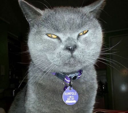 scary cat name tag