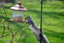 bird feeder squirrel proof