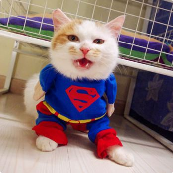 cat costume superhero from DC comics