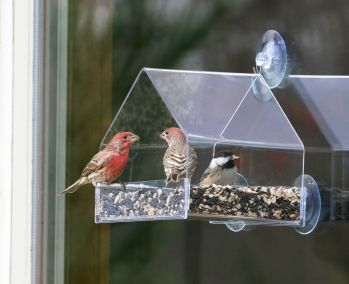 perky pet bird feeder