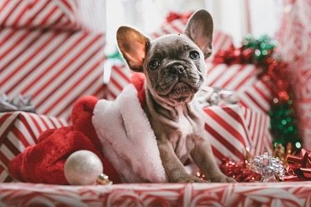 dog in a Santa dress