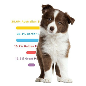 What is a Dog DNA Test?