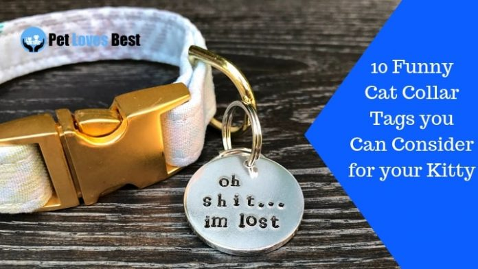 Featured Image 10 Funny Cat Collar Tags you Can Consider for your Kitty