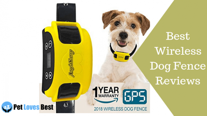 Featured Image Best Wireless Dog Fence Reviews
