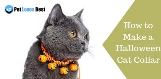 Featured Image How to Make a Halloween Cat Collar
