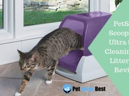 Featured Image PetSafe ScoopFree Ultra Self-Cleaning Cat Litter Box Review