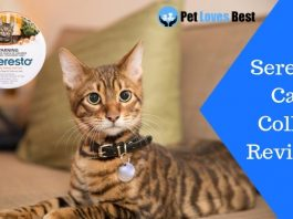 Featured Image Seresto Cat Collar Reviews