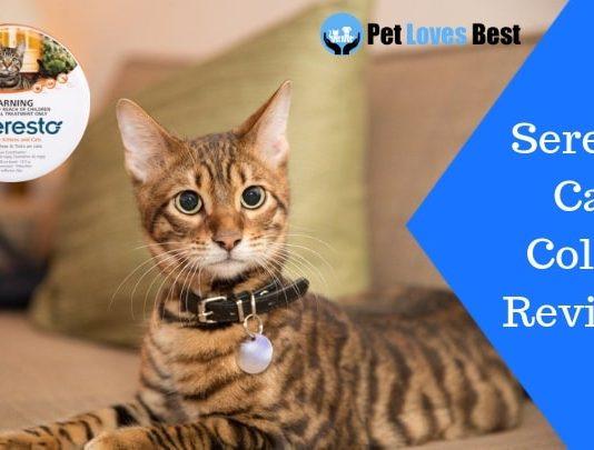 Featured Image Seresto Cat Collar Reviews
