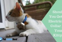 Featured Image Should You Get an Electric Cat Collar for Your Kitty?