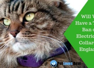 Featured Image Will We Have a Total Ban on Electric Cat Collars in England?