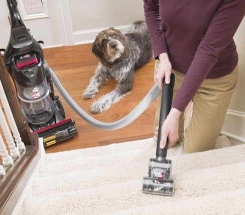 Do I need a Vacuum for Dealing Pet Hairs Vacuum for Pet Hair