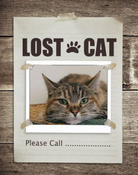 find a lost cat outdoor