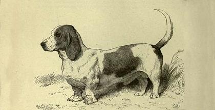 basset hound history
