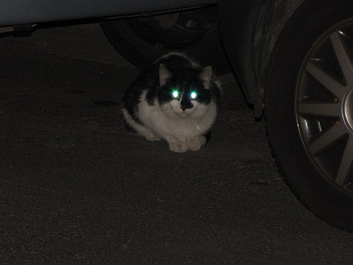 shining cat's eyes