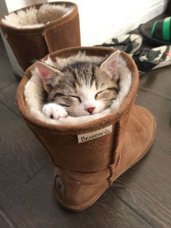 kitten stuck in shoe