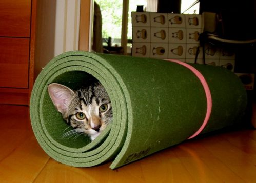 cute cat in the mat