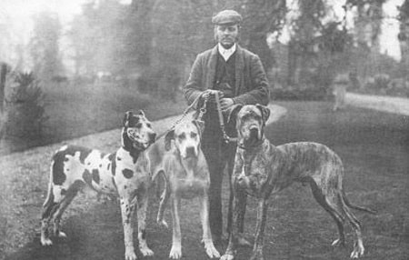 great dane dog breed origin
