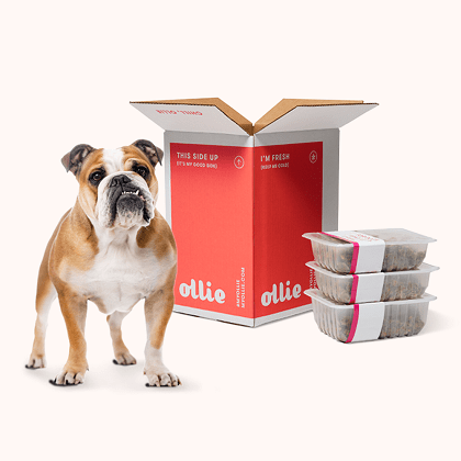 ollie dog food black friday deals and offers
