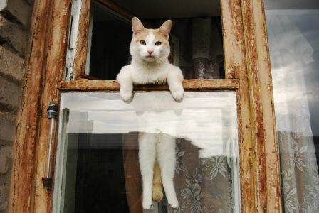 cute cat escaping from window
