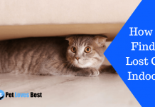 Featured Image How to Find a Lost Cat Indoors