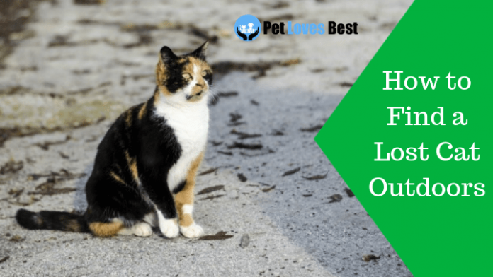 Featured Image How to Find a Lost Cat Outdoors