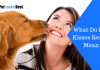 Featured Image What Do Dog Kisses Really Mean