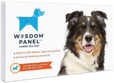 wisdom panel 3.0 dog DNA kit