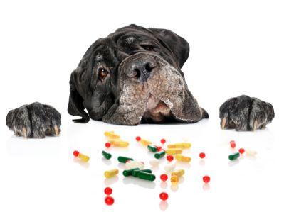 flea and tick medication