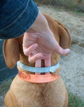 anti-flea dog collar
