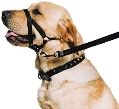 dog halter and head collar