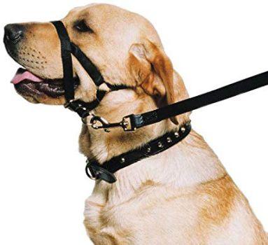 dog halter and head collar