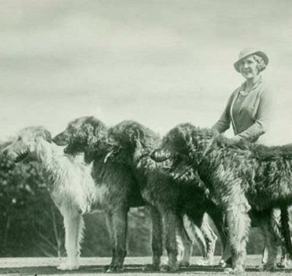 irish wolfhound history