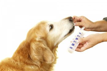 best oral flea and tick prevention for dogs