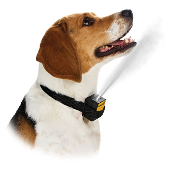 citronella dog collar spray
