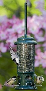 Best Bird Feeders