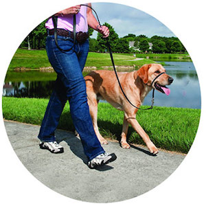 Best Dog Collars for Pulling on a Leash
