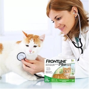 Best Flea and Tick Treatment for Cats