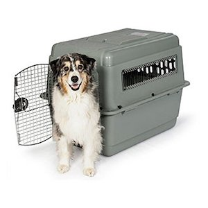 best plastic dog crate available in the market