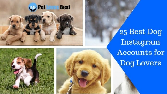 Featured Image 25 Best Dog Instagram Accounts for Dog Lovers