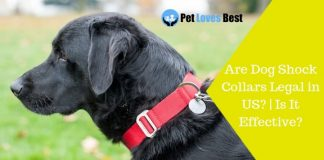 Featured Image Are Dog Shock Collars Legal in US? | Is It Effective?