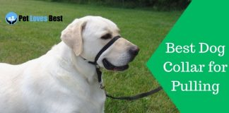 Featured Image Best Dog Collar for Pulling