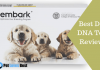 Featured Image Best Dog DNA Test Reviews
