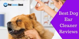 Featured Image Best Dog Ear Cleaner Reviews