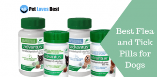 Featured Image Best Flea and Tick Pills for Dogs