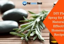 Featured Image DIY Flea Spray for Dogs | Natural & Effective Homemade Recipes