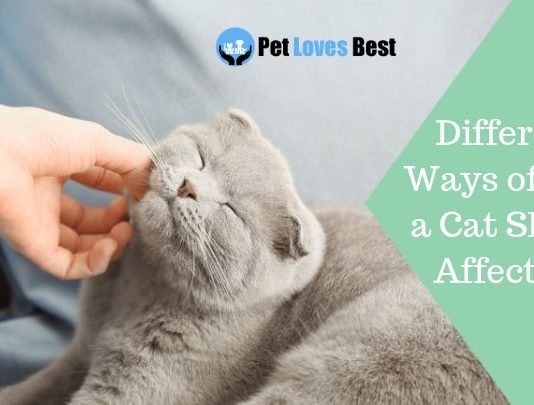Featured Image Different Ways of How a Cat Shows Affection