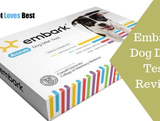 Featured Image Embark Dog DNA Test Review