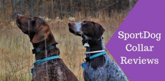Featured Image SportDog Collar Reviews