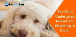 Featured Image The Most Underrated Reason for Shedding in Dogs!
